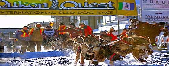 Yukon Quest Start (c) C. Thies